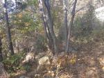2017타경32611 - 인천지법 [임야] 인천광역시 옹진군 덕적면 진리 산21 - 부동산미래