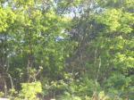 2017타경61773 - 부천지원 [임야] 경기도 김포시 양촌면 유현리 산36-12 - 대한법률부동산연구소