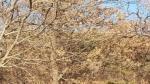 2017타경27807 - 수원지법 [임야] 경기도 오산시 내삼미동  산21-1 - 부동산미래