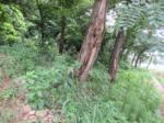 2017타경3261 - 안양지원 [임야] 경기도 과천시 과천동 449-58 - (주)원앤원플러스부동산중개법인
