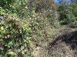2017타경12243 - 청주지법 [임야] 충청북도 청주시 상당구 용암동  산67-1 - 대한법률부동산연구소