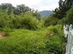 2017타경1358 - 영동지원 [임야] 충청북도 옥천군 옥천읍 대천리 373-10 - 부동산미래