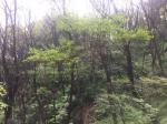 2017타경429 - 영덕지원 [전] 경상북도 영덕군 강구면 하저리 151-1 - 부동산미래