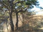 2018타경429 - 포항지원 [임야] 경상북도 포항시 남구 호미곶면 강사리 산56 - 대한법률부동산연구소
