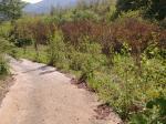 2018타경31070 - 진주지원 [임야] 경상남도 산청군 산청읍 정곡리 산64 - 가림법원경매
