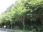 2017타경7042 - 통영지원 [임야] 경상남도 거제시 연초면 덕치리 산18-6 - 대한법률부동산연구소
