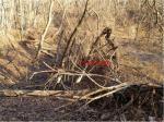 2017타경2494 - 거창지원 [답] 경상남도 합천군 봉산면 송림리 59 - 대한법률부동산연구소