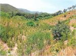 2017타경5249 - 순천지원 [임야] 전라남도 광양시 옥곡면 신금리 산35 - 부동산미래