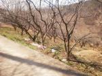 2018타경2230 - 순천지원 [임야] 전라남도 광양시 옥룡면 동곡리 167-2 - 부동산미래
